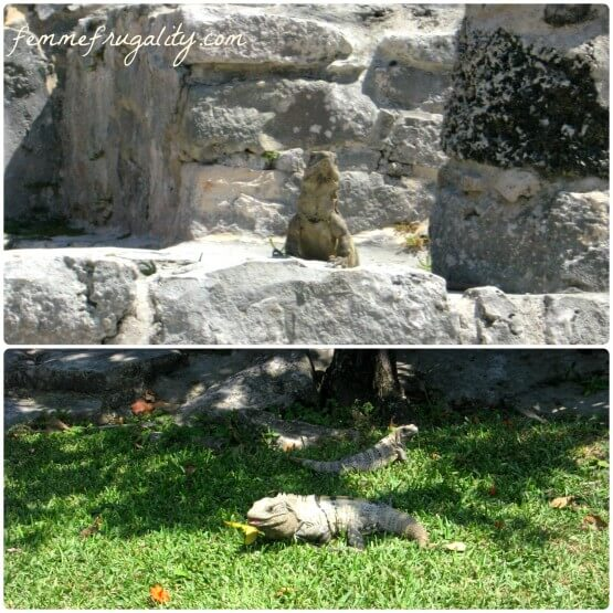 tulum ruins iguanas