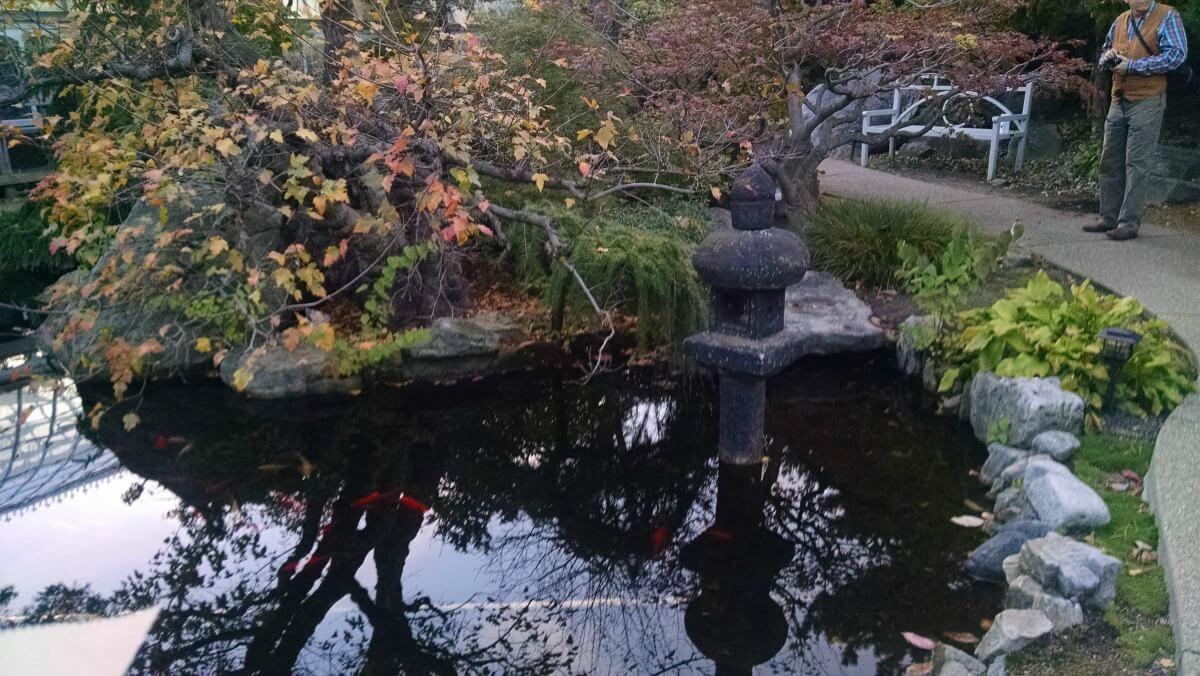 japanese-garden-phipps
