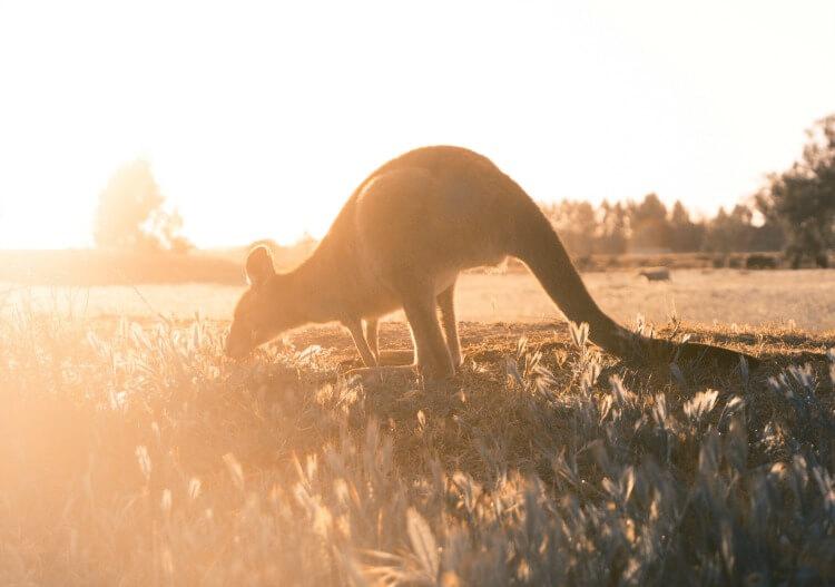 Ways to build savings for your trip to Australia.