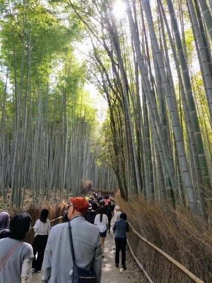 CROWDS bamboo forest arashiyama