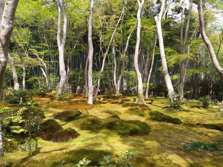 Moss garden temple Kyoto