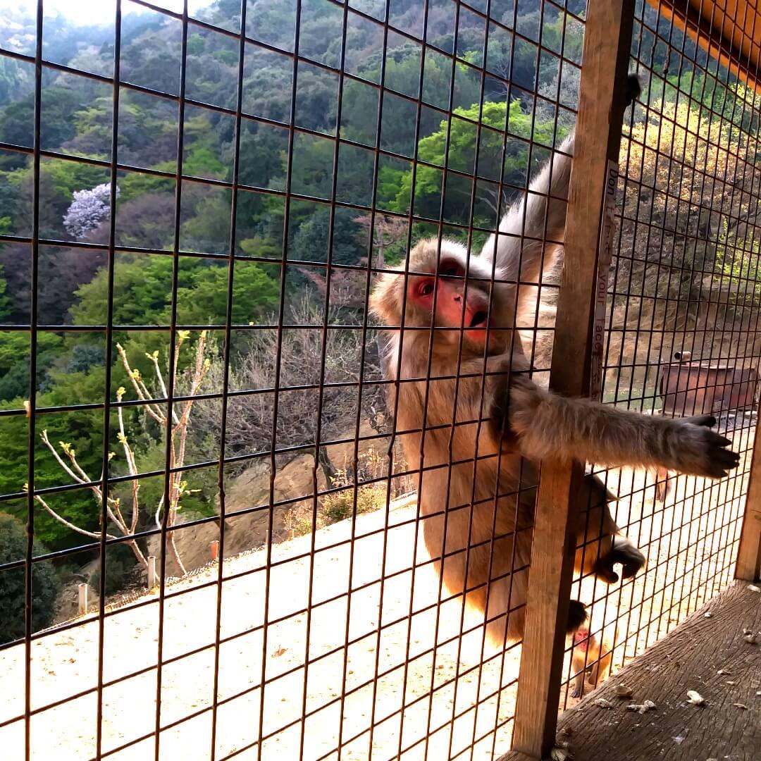 unhappy monkey