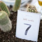cactus wedding invitations