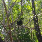 black bird sanibel island