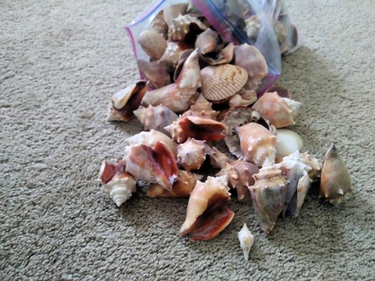 flordia shell cache