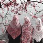 Three women wearing pink and white khimars standing by the water's edge underneath a flowering, pink/purple plum tree.