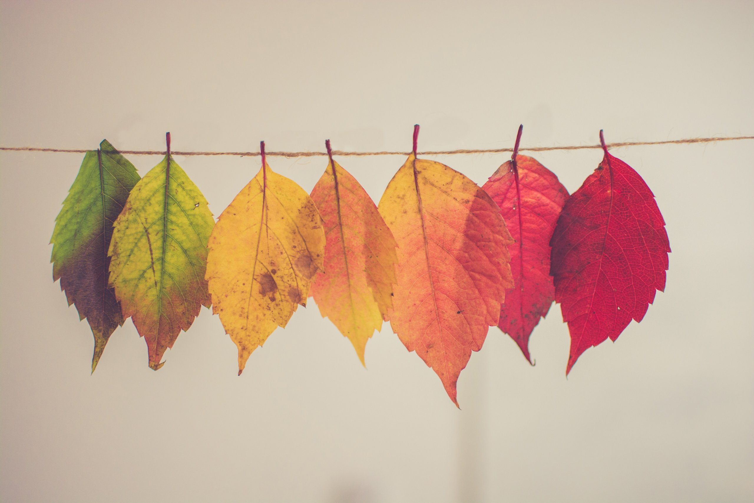leaves hanging on a twine line fading from green to yellow to red.