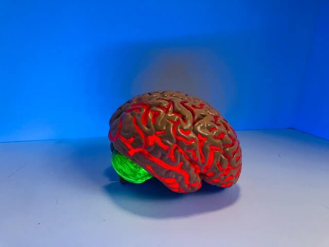 Picture of a hard, plastic brain in a blue room. The brain is lit up mostly red with one section near the back lit up green.